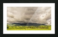 Nature IV Picture Frame print