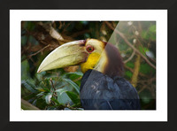 Toucan Picture Frame print