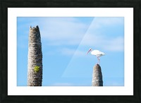 White bird Picture Frame print