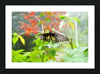 The Butterfly Picture Frame print
