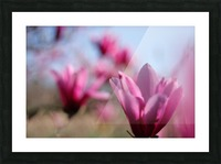 Line of Magnolias Picture Frame print