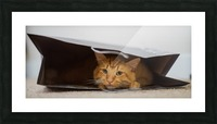 Cat In The Bag Picture Frame print