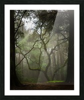 Clearing in the Woods Picture Frame print
