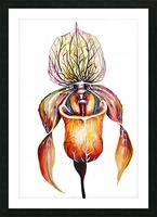 Orchid Venus Slipper Picture Frame print