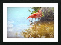 Pink Flamingo Wading In Water Picture Frame print