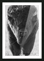 7893 - Buffalo Picture Frame print