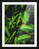 green leaves texture background Picture Frame print