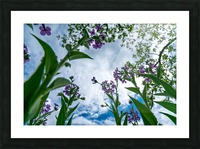 Skyward 2 Picture Frame print