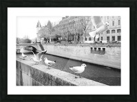 Les Oiseaux Picture Frame print