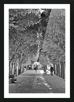 Arbre dalignement Picture Frame print