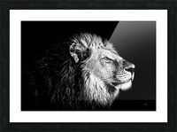 Lion with Attitude Picture Frame print
