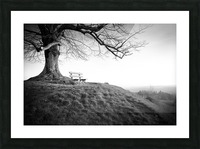 lonely bench under a tree Picture Frame print