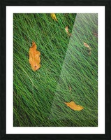 green grass field background with dry brown leaves Picture Frame print
