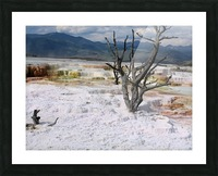 Mammoth Hot Springs Yellowstone National Park Picture Frame print