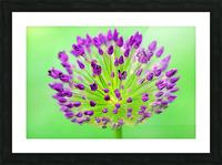 Neon Allium Picture Frame print