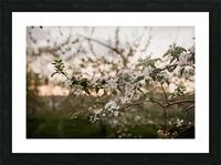 Fleurs de pommes Impression et Cadre photo