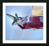 Oiseau-mouche Impression et Cadre photo