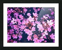 blooming pink flowers garden texture background Picture Frame print