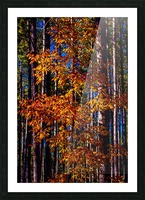 Autumn Fire Picture Frame print