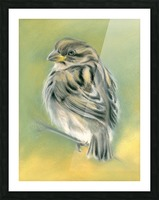 Sunny Sparrow Picture Frame print