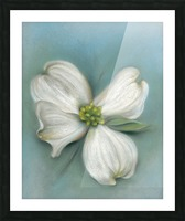 White Dogwood with Leaf Picture Frame print