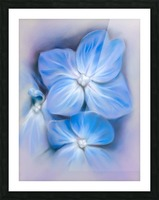Blue Hydrangea Blossoms Picture Frame print