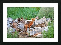 Time To Go Hunting Picture Frame print