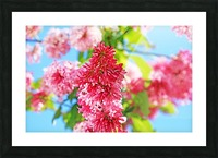 Sweet Side Of Red Picture Frame print