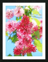 Sweet Side Of Red I Picture Frame print