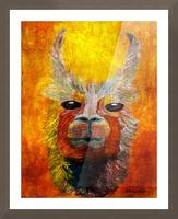 Alpaca Picture Frame print