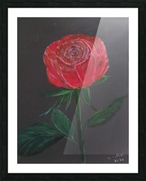 Single red rose Picture Frame print