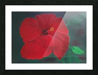 Hibiscus Picture Frame print