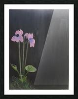purple iris Picture Frame print