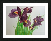 Irises Picture Frame print