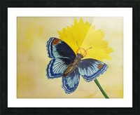 Blue Butterfly Picture Frame print