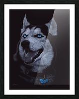 HUSKY_COLOR PENCIL_65.50X80.50 Picture Frame print