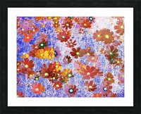 Cosmos Flowers Brown Picture Frame print