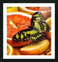 Butterfly And Oranges Picture Frame print
