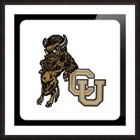 vintage college mascots colorado buffalo art Picture Frame print