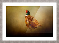 Ring Necked Pheasant Picture Frame print