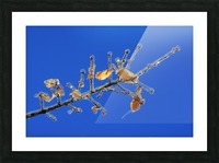 Sucreries glacees Picture Frame print