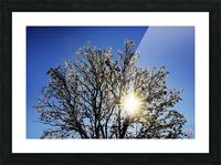 Eblouissant Picture Frame print