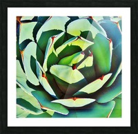 Succulent Picture Frame print