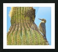Cactus Wren Picture Frame print