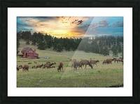 Colorado Elk Picture Frame print