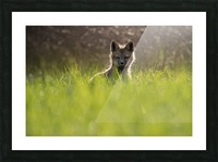 A contre jour   Picture Frame print