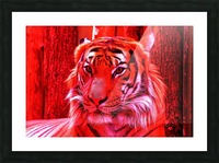 Rare Red Tiger Picture Frame print