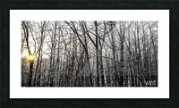 Through the Icy Trees Picture Frame print
