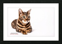 Cat life Picture Frame print
