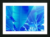 Blue Bananas - Re-Imagined Tropical Biophilia Picture Frame print